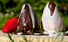 Glaze - Glazed Strawberries HMM! (G. Lang) Tags: sonya7ii macro chocolate glaze fraises sonyalpha7ii strawberries schokolade makro macromondays chocolat sonyilce7m2 erdbeeren tamronaf90mm128macro11