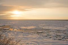 冬の知床 05 (tomomega) Tags: 知床 北海道 日本 japan 流氷 driftice 雪 snow 夕日 sunset
