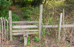 The Style (M C Smith) Tags: style path forest green pentax bushes weeds fence trees