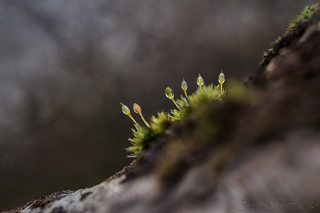 Sprouting Sporophytes
