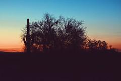Picacho Peak || AZ (Jacqueline M Williams) Tags: evening sky blue pink orange sunset cacti silhouette cactus desert arizona peak picacho shadow plants horizon mountain