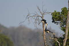 Play! (Ramesh Adkoli) Tags: birds landscape ganeshgudi d500 capturenx