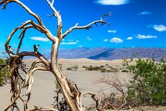 Mesquite Flat Sand Dunes (aparlette) Tags: deathvalleynationalpark landscape tree circularpolarizer nationalpark sanddune desert mesquiteflatsanddunes clouds bluesky deathvalley stovepipewells california unitedstates us