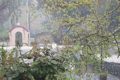 Ψίνθος (Psinthos.Net) Tags: ψίνθοσ psinthos march spring μάρτησ μάρτιοσ άνοιξη φύση nature springstorm ανοιξιάτικηκαταιγίδα καταιγίδα μπόρα storm σταγόνεσβροχήσ σταγόνεσ raindrops drops raining βρέχει βροχή rain road δρόμοσ wetroad βρεγμένοσδρόμοσ chapel εκκλησάκι άγιοσνικόλασ άγιοσνικόλαοσ saintnicolas cross σταυρόσ γεφύρι πεζοδρόμιο sidewalk pavement πλακόστρωτο βρύση βρύσηψίνθου βρύσηψίνθοσ περιοχήβρύση vrisi vrisiarea vrisipsinthos planetree πλάτανοσ δέντρο tree ευκάλυπτοσ eucalypt field χωράφι χόρτα greens πετρόχτιστοστοίχοσ stonewall πετρόχτιστο βροχερήμέρα rainingday valley psinthosvalley κοιλάδα κοιλάδαψίνθου κοιλάδαψίνθοσ