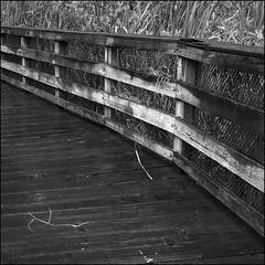 Totem Lake Walk #5 (NoJuan) Tags: bw square blackwhite path walk olympus trail theme series squared pathway bsquare totemlake micro43 microfourthirds olympusep3 1442mmolympuslens