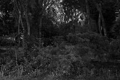 Burgemeester Gillonlaan, Kortrijk (bm^) Tags: city trees urban blackandwhite bw white black tree nature night zeiss bomen nikon belgium belgique zwartwit belgië boom westvlaanderen carl zwart wit parc stad kortrijk blackwhitephotos planart1450 d700 zf2 planar5014zf nikond700 начинизавиждане westernflanders ersmuslaan