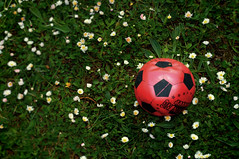 Having a ball (Indigo Skies Photography) Tags: lighting camera flowers light red colour green grass daisies digital ball lens photography photo aperture exposure flickr image australia victoria iso colourful soccerball glenwaverley nikond90 raychristy