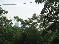 Forest to the City (aaron.knox) Tags: trees boston ma massachusetts urbannature roxbury forthill