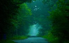 tree tunnel (Dove*) Tags: morning trees light green leaves scotland shadows mistymorning