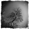 northbridge (AS500) Tags: camera tree north sydney retro shore android northbridge