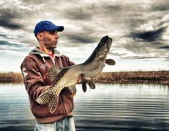 pike (seesomething) Tags: lake fishing serbia pike joca ribolov štuka