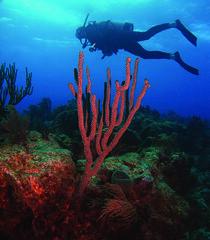 Anglų lietuvių žodynas. Žodis gorgonian coral reiškia gorgonian koralų lietuviškai.