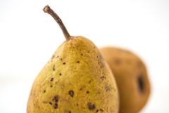 fruit of the season (robert.molinarius) Tags: macro k fruit germany season fx lightbox birne molinarius nikond700 blinkagain bestofblinkwinners