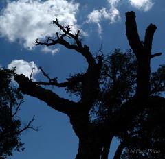 I can not reach the sky (fjprieto71) Tags: blue sky espaa tree azul clouds digital arbol spain creative andalucia panasonic cielo cadiz paco f8 nube backlighting prieto pacoprieto dmcfz45 fjprieto71