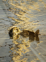 Turn it Off !!! (Steve Corey) Tags: sea water sunshine animals bay otter blinding seaotter slocounty morrobayca stonglight