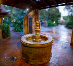 Animal Kingdom - Bubble Fountain