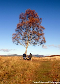 Lunchtime In The Cairngorms