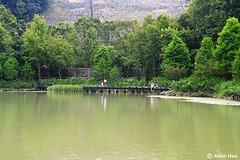 Checheng  (AllenHsu) Tags: taiwan  nantou checheng   2013 sheuili