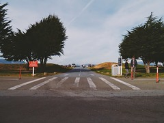 (brennan.browne) Tags: sanfrancisco trees lumix wideangle panasonic crosswalk cones m43 mft gx1 microfourthirds