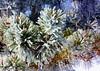 Winter Pines (A Picture is Worth ---) Tags: pinetree bluesky evergreen lightandshadow naturesart coniferoustree whisperingpines snowonpine winterart winter2010 snowandfrost snowcatcher frostypines
