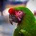 Zihuatanejo Mexico - Nov 13 - Buffon Macaw