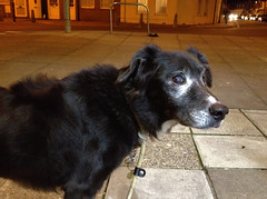 Evening walk to the shop (Jainbow) Tags: road rescue dog dark evening store collie cross sam pavement supermarket portsmouth southsea cooperative jainbow