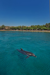 101_Dafna Tal_EILAT_IMOT (Israel_photo_gallery) Tags: nature animal animals fun israel dolphin redsea dive diving dolphins leisure recreation eilat dolphinsreef