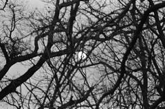 Lost places. (Polvere d'Argento) Tags: old italy moon white black tree film night 35mm vintage lost photography twilight ruins italia place places luna retro emilia negative 400 plus hp5 analogue fotografia albero bianco negativo antico ilford nero notte federico analogica rami mistery rovine crepuscolo brunetti pellicola mistero analogico perduto dimenticato luoghiabbandonati federicobrunetti