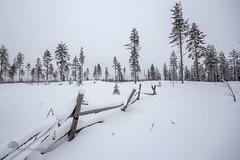 La barrire (photosenvrac) Tags: photo neige paysage foret froid espace barriere finlande laponie grandnord thierryduchamp