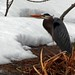 """Heron in Snow,"