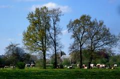Lentetafereel (RTV Drenthe - foto's) Tags: winter lente drenthe weer rtv 19april weerfoto