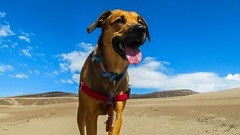 Desert Dog (NYKat33) Tags: travel blue vacation sky dog monument sand midwest colorado colorful desert bright national bestfriend doggie k9 baybaykid nikond3100