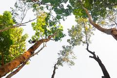 (S I F A T :D) Tags: life trees green nature colors beautiful beauty nikon exposure bangladesh exposed 18105 netrokona birishiri d5100
