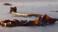 on the beach (Johnson Cameraface) Tags: holiday seaweed macro beach 50mm spring may olympus berwickontweed f2 berwick zuiko 2014 zd e620 johnsoncameraface