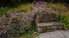 Tresco Abbey Gardens (Rainbow Mermaid) Tags: vacation england holiday may islesofscilly scillies 2015 scillyisles rainbowmermaid