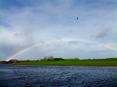 Taking a duck-dive for Smile on Sunday # Rainbow (violetchicken977) Tags: smileonsunday rainbow goose rainbows isaacnewton
