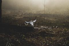 scaryy (Naveen Gopalakrishnan) Tags: skull bones scary spooky dark nature animals paleantology smog fog creepy evil death ooty trecking nikon nikond3200 d3200
