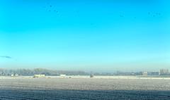 Birds braving the cold of winter. (Alex-de-Haas) Tags: 50mm d5 dutch hdr january nederland nederlands netherlands nikkor nikkor50mm nikon nikond5 noordholland thenetherlands warmenhuizen westfrieseomringdijk bevroren cityofwarmenhuizen cold daglicht daylight frozen gevroren handheld highdynamicrange icy januari koud landscape landschap licht light overdag polder polderlandschap sun sunray sunrays sunbeams sunny sunrise winter zon zonnestralen zonnig zonsopgang