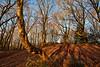 Winter Woodland (simonannable) Tags: staplefordhill woodland stapleford rich colour nature lizasenchantedgarden winter sunrise baretrees nottinghamshire naturalbeauty lizasenchantingphotogarden nikon nikond750 photography thegreatoutdoors