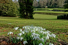 Snowdrops (Sparky the Neon Cat) Tags: europe uk united kingdom gb great britain england north yorkshire studley royal gardens water park moon pond snowdrop flower