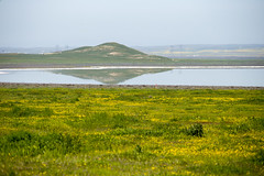 Reflection on Soda Lake and wild flower (CaptSpaulding) Tags: canon california color contrast clouds 6d ef24105mm canonefs1855mmf3556 landscape light leaves water carrizoplain sodalake flowers flower flora field rocks sky
