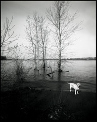 Kelley Point with Dog 170302 (jimhairphoto) Tags: kelleypoint willametteriver columbiariver confluence america nw northwest leftcoast oregon remainsoftheday naturalworld 4x5project crown graphic homemade wideangle fixedfocus camera 4x5 film ilford fp4 blackandwhite blancetnoir schwarzeaufweis blancoynegro blancinegre siyahrebeyaz jimhairphoto