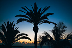 DSC_2755-Edit (Kálosi Tamás) Tags: nikon d750 nikkor 50mm sunset sun tenerife sky blue palm palmtree beach beautiful summertime summer canari islands siluett fun orange