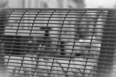 Zitbank (paulbunt60) Tags: blackwhite zwartwit zitbank staaldraad bench