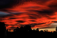 Sunset..... (Timothy Costello) Tags: trees sunset arizona cactus sky southwest tree nature phoenix beautiful clouds landscape photography landscapes nikon shadows view desert natural earth ngc silhouettes sunsets scottsdale sunsetting desertlandscape nationalgeographic arizonahighwaysmagazine azcentral nikonflickraward az365