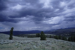 IMG_1364 (murraymike89410) Tags: yellowstone wyoming np