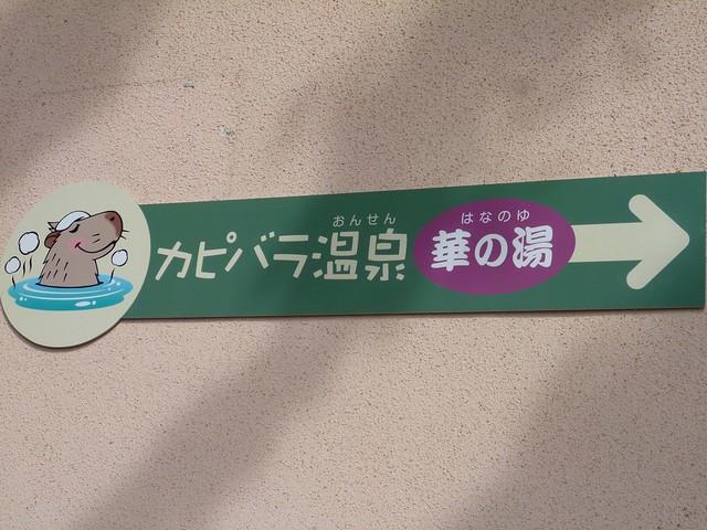 大好きなカピバラさんのもとへ!!|須坂市動物園
