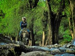 Por el sendero (Blas Torillo) Tags: trees man verde green méxico landscape mexico nikon árboles donkey paisaje burro coolpix puebla señor p500 professionalphotography ahuehuetes nikonp500 nikoncoolpixp500 coolpixp500 fotografíaprofesional mexicanphotographers fotógrafosmexicanos sanagustínahuehuetla