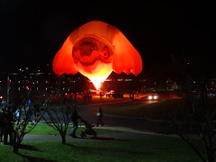 Skywhale. it has eight udders or breasts at Canberra Floriade. This is a giant hot air balloon lit up at night for the Floriade. Do whales have breasts and udders. Looks more like an Australian  koala to me.