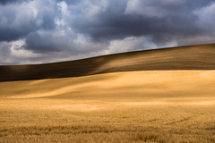 The Future is Bright (absencesix) Tags: travel summer sky plants brown sun nature colors field weather clouds gold washington seasons unitedstates wheat august noflash northamerica lonely portfolio washtucna lightandshadow minimalist locations locale wheatfield goldenlight 70mm easternwashington manualmode iso50 2470mmf28 2013 500px thepalouse geo:state=washington exif:focal_length=70mm exif:iso_speed=50 hasmetastyletag naturallocale adjectivesfeelingdescription selfrating3stars 1125secatf80 camera:make=nikoncorporation exif:make=nikoncorporation geo:countrys=unitedstates exif:lens=240700mmf28 exif:aperture=ƒ80 subjectdistanceunknown washtunca nikond800e exif:model=nikond800e camera:model=nikond800e 2013travel august32013 palousefallsmoscowsteptoephototrip0802201308042013 geo:city=washtucna geo:lon=118382784 geo:lat=46682258 46°4056n118°2258w washtucnawashingtonunitedstates